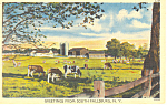 Click here to enlarge image and see more about item p14659: Dairy Cattle South Fallsburg, NY Postcard