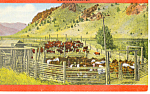 Click here to enlarge image and see more about item p14660: A Western Corral Postcard