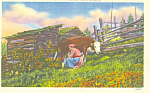 Click here to enlarge image and see more about item p14661: Milking Time in North Carolina Postcard