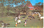Click here to enlarge image and see more about item p14662: Bring in the Cows Postcard p14662