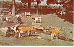 Click here to enlarge image and see more about item p14663: Cows A Pastoral Scene Postcard p14663