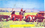 Click here to enlarge image and see more about item p14671: Cowboys and  Cattle Drive Postcard p14671