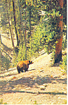 Click here to enlarge image and see more about item p14687: Black Bear In New England Postcard p14687