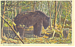 Click here to enlarge image and see more about item p14696: A Big Black Pennslvania Bear  Postcard p14696
