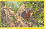 Click here to enlarge image and see more about item p14698: I Cant Bear to Leave West Virginia Postcard p14698