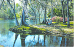 Silver Springs Florida Postcard p14898