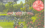 Click here to enlarge image and see more about item p14899: Cypress Gardens FL Camellia Time Postcard p14899