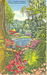 Click here to enlarge image and see more about item p14905: Cypress Gardens  FL  Azaleas Postcard p14905