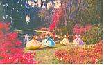 Cypress Gardens,FL, Happy Times Postcard