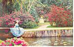 Cypress Gardens,FL, Southern Belles Postcard