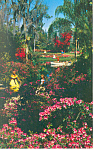 Click here to enlarge image and see more about item p14915: Cypress Gardens  FL  Azalea Time Postcard p14915