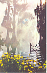 Click here to enlarge image and see more about item p14918: Cypress Gardens  FL  Cypress Trees Postcard p14918