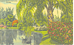 Sarasota Jungle Gardens FL Postcard p14935