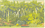 Click here to enlarge image and see more about item p14936: Sunken Gardens St Petersburg, FL Postcard p14936
