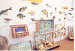 Clearwater Marine Science Center FL Postcard p14979