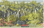 Click here to enlarge image and see more about item p1497: St Petersburg FL Sunken Gardens Postcard