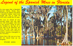 Legend of the Spanish Moss, FL Postcard
