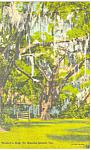 Wesley's Oak, St Simons Island,GA Postcard
