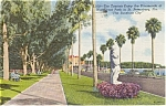St Petersburg FL Waterfront Park Postcard p1499