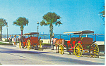 St Augustine FL Horse Carriages Postcard p15028