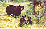 Click here to enlarge image and see more about item p15046: Black Bear and Cubs Postcard p15046
