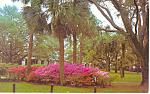 Cloister Hotel,Sea Island, GA Postcard