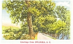 Swansea SC Wooded Lane Postcard p1533