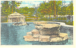 Click here to enlarge image and see more about item p15428: Seals at Zoo Forest Park St Louis MO Postcard p15428