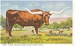 Click here to enlarge image and see more about item p1544: Texas Longhorn Postcard p1544