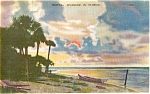 Florida Tropical Splendor Postcard p1551