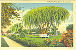 Click here to enlarge image and see more about item p15547: Grand Island,NE, Memorial Park Postcard
