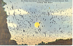 Bat Flight, Carlsbad Caverns, NM  Postcard
