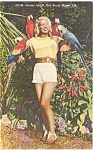 Click here to enlarge image and see more about item p1572: Miami FL Parrot Jungle Postcard