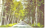 Shelburne Birches, White Mountains, NH  Postcard ca1959