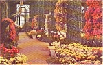 Click here to enlarge image and see more about item p1609: Kennett Square PA Longwood Gardens Postcard