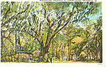 Wesleys Oak, Brunswick, GA  Postcard