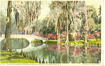Click here to enlarge image and see more about item p16175: Natures Mirror Charleston SC  Postcard p16175