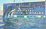 Click here to enlarge image and see more about item p16234: Marineland of Florida Postcard