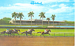 Click here to enlarge image and see more about item p16247: Grandstand Hialeah Race Track, FL Postcard