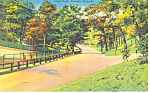 Click here to enlarge image and see more about item p16310: High Park Toronto Ontario Canada Postcard p16310 1951