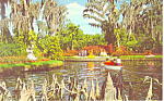 Click here to enlarge image and see more about item p16394: Cypress Gardens,FL, Cypress Knees Postcard