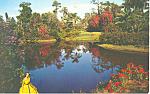 Cypress Gardens,FL, Blossom Time Postcard