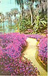 Click here to enlarge image and see more about item p16399: Cypress Gardens,FL, Azalea Lane Postcard