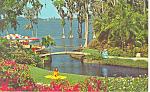 Cypress Gardens,FL, Roses Postcard
