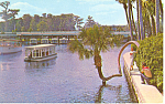 Silver Springs, FL, Lucky Palm Postcard