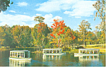 Silver Springs  FL Down River Scene Postcard p16414