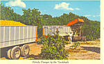 Click here to enlarge image and see more about item p16430: Florida Oranges by the Truckload Postcard p16430