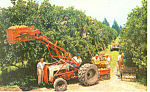 Click here to enlarge image and see more about item p16431: Citrus Harvest in Florida Postcard p16431