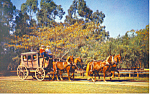 Click here to enlarge image and see more about item p16526: Stage Coach,Knotts Berry Farm CA Postcard p16526