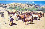 Click here to enlarge image and see more about item p16578: Wild Horse Herd Postcard
